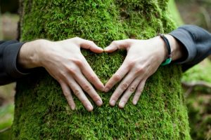 freepic.com - hands-in-shape-of-heart-on-a-tree_1004-13